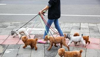 济南发布养犬通告外出遛狗时狗绳最长1.5米