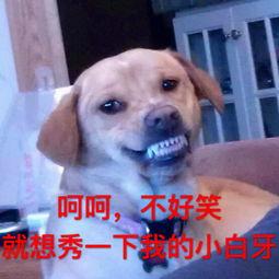 搞笑狗狗图片 搞笑狗狗图片大全