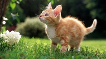 猫咪可以闻到自己的小便吗