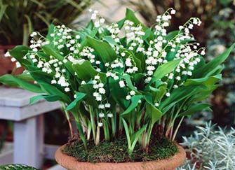 十二种招财花(十二生肖种什么植物能旺财)