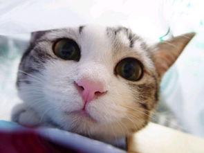电脑桌面壁纸搞笑-猫猫图片