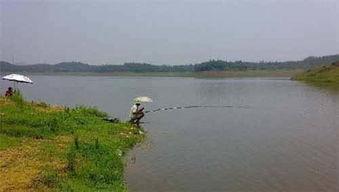 哪里可以找到免费的钓鱼场