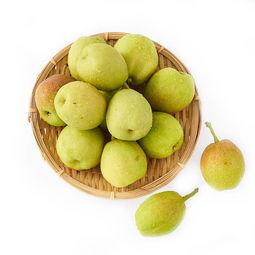 新疆库尔勒香梨6粒装 单果95g以上