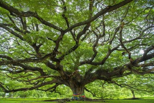 花园里的小橡树议论文范文