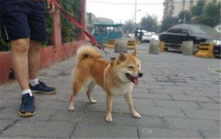 多地出台养犬规定:遛狗不拴绳得罚款!