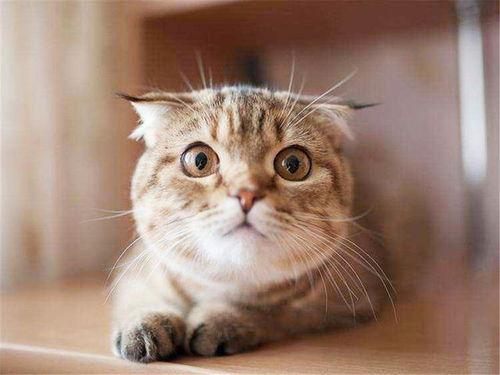关于猫咪的说说