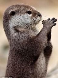 otter是什么意思