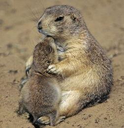 动物世界亦温馨浓情母爱令人动容