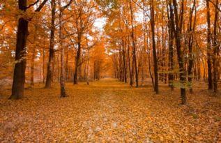 关于秋风雨的诗句