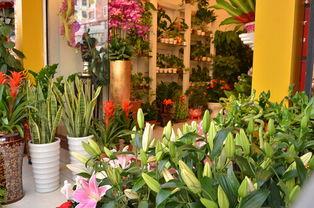 在北京怎么开一家花店 开鲜花店流程有哪些