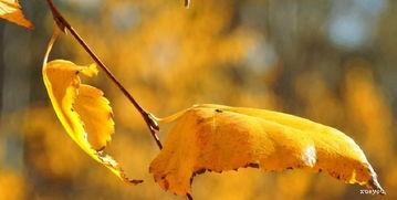 梧桐叶秋天的唯美句子