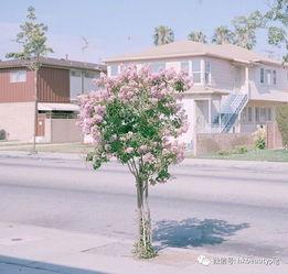 2019最漂亮微信花草头像