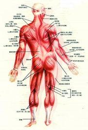 求人体网状结构视图