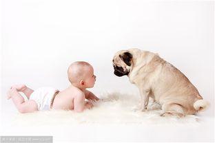 狗狗宝宝起名注意事项