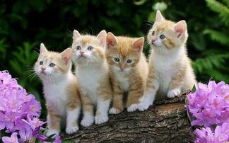 写猫的好词好句有哪些