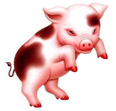 屬豬的風水運氣