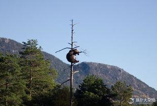 别理我 我只想做一名安静的美棕熊