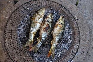 鱼食料可以养花吗