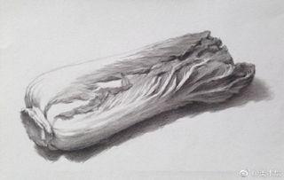 白菜应该怎么画?