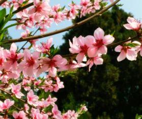 四字词语什么的鲜花