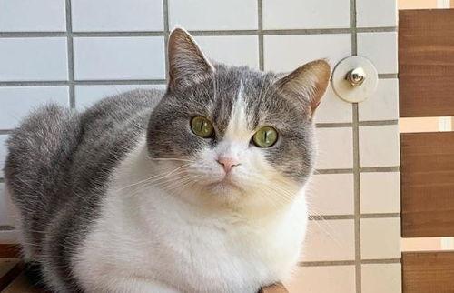 猫咪雾化的药物