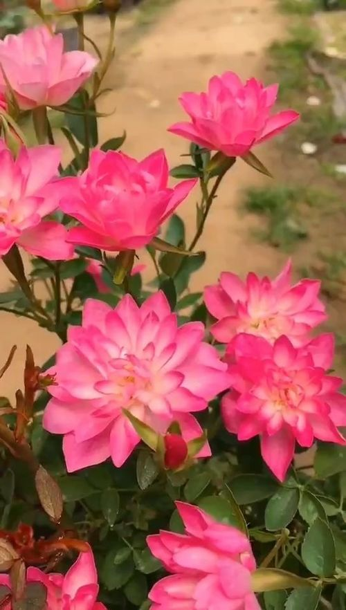 养花的花喷洒哪里有
