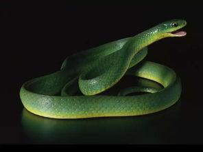 属蛇的女人命运一般怎么样