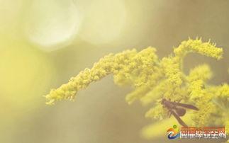 描写春天美好景色的句子有哪些