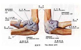 肘关节疼痛的原因健身