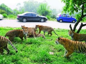 中国动物园协会零距离自驾游野生动物园应淘汰
