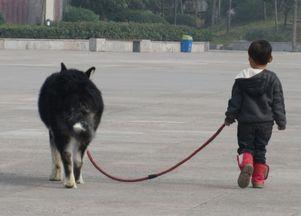 遛狗不牵绳子违法吗狗为什么每天都要遛