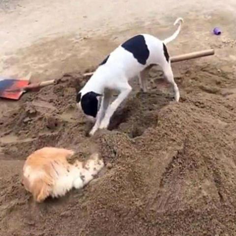 狗沙怎么用