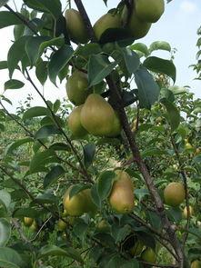 陕西其他水果 陕西其他水果批发 陕西其他水果厂家供应信息