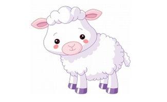 属羊的生肖的人命运如何