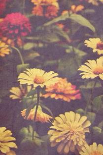 养花的花儿聊天背景图