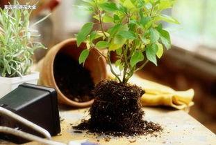 在家中怎样测养花土的酸碱度