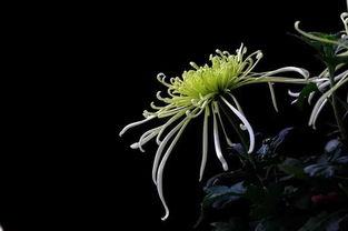 养花的学问到底是什么