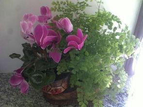 关于爱花养花的手抄报大全