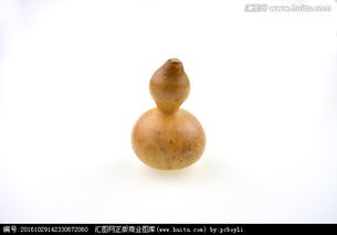 亚腰葫芦养花