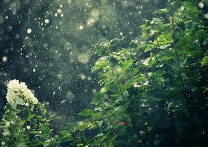 梦见种树,是什么意思(梦见柳树、杨柳、垂柳是什么意思)