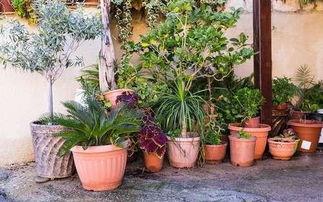 养花的营养土可以种菜吗