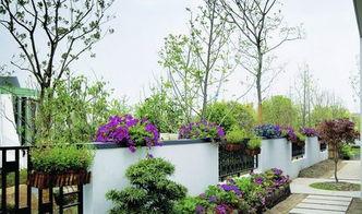 庭院綠化植物風水
