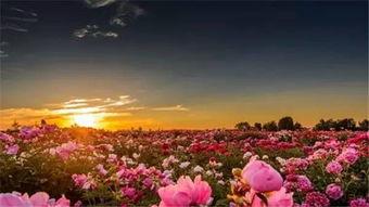烟花三月不用下扬州,在河南就可以给你点 颜色 看看