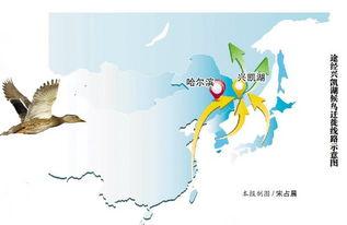 候鸟迁徙路线图