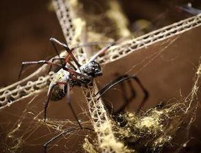 做梦梦到一个怀了蜘蛛