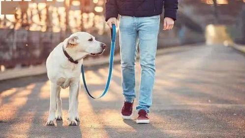 近年来,遛狗不牵狗绳等不文明养犬行为,已给市民生活带来严重困扰。