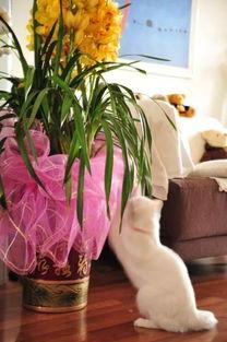 养猫不养花