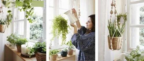 国外家庭室内养花