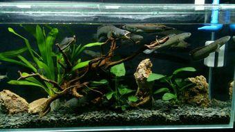 养花水里养什么样的鱼