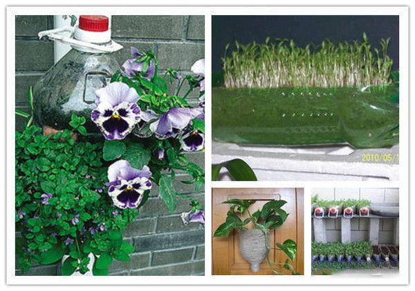 自制水养花盆的卡托